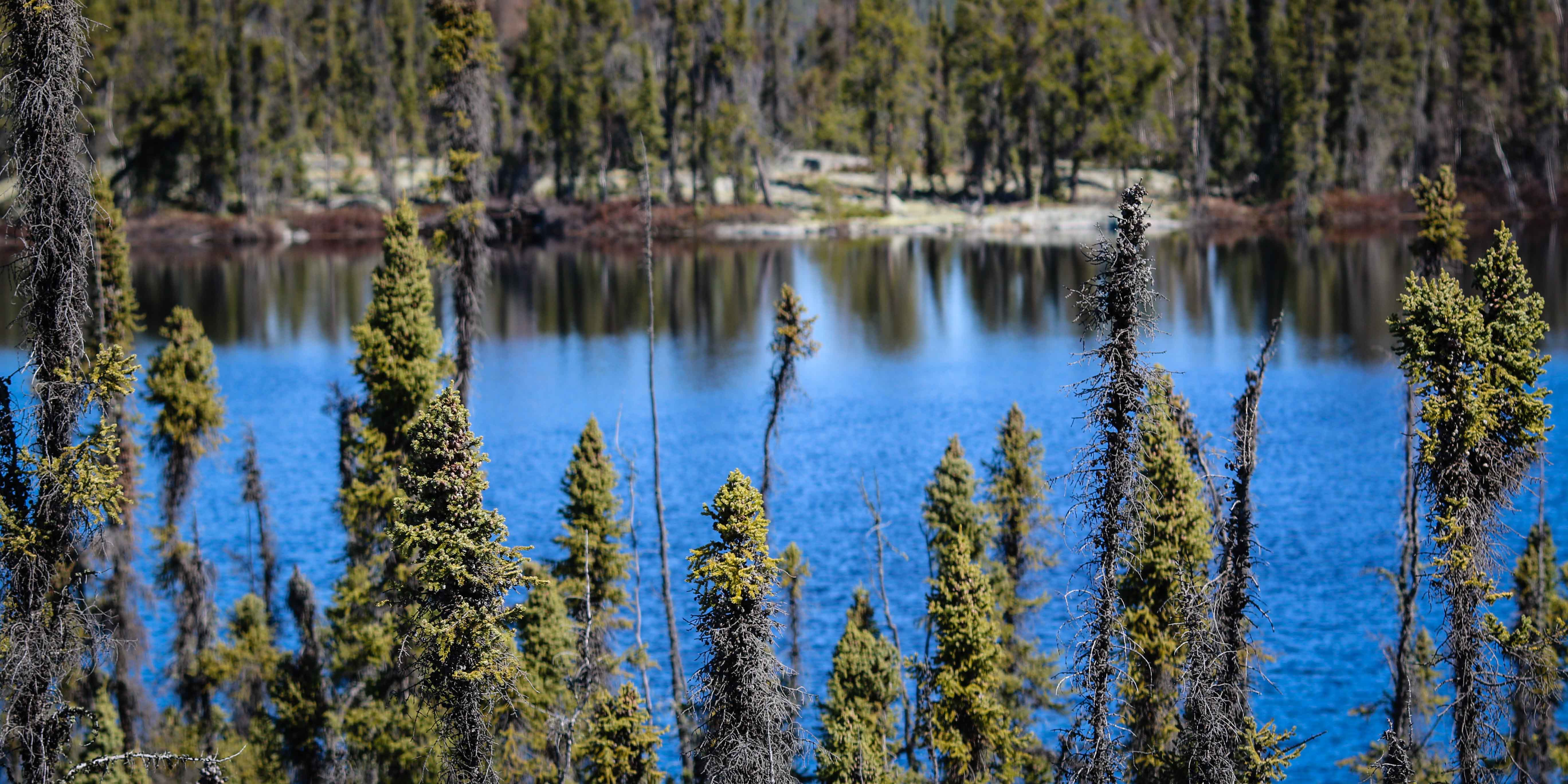 A scenic view of a Northwest Territories lake north of Yellowknife. Ollie Williams/Cabin Radio