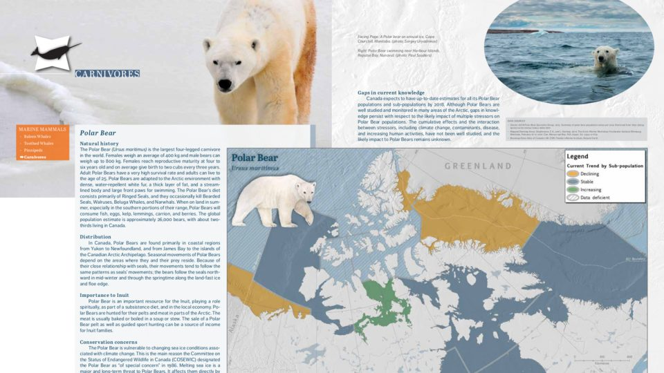 Pages from Canada's Arctic Marine Atlas show information about polar bears