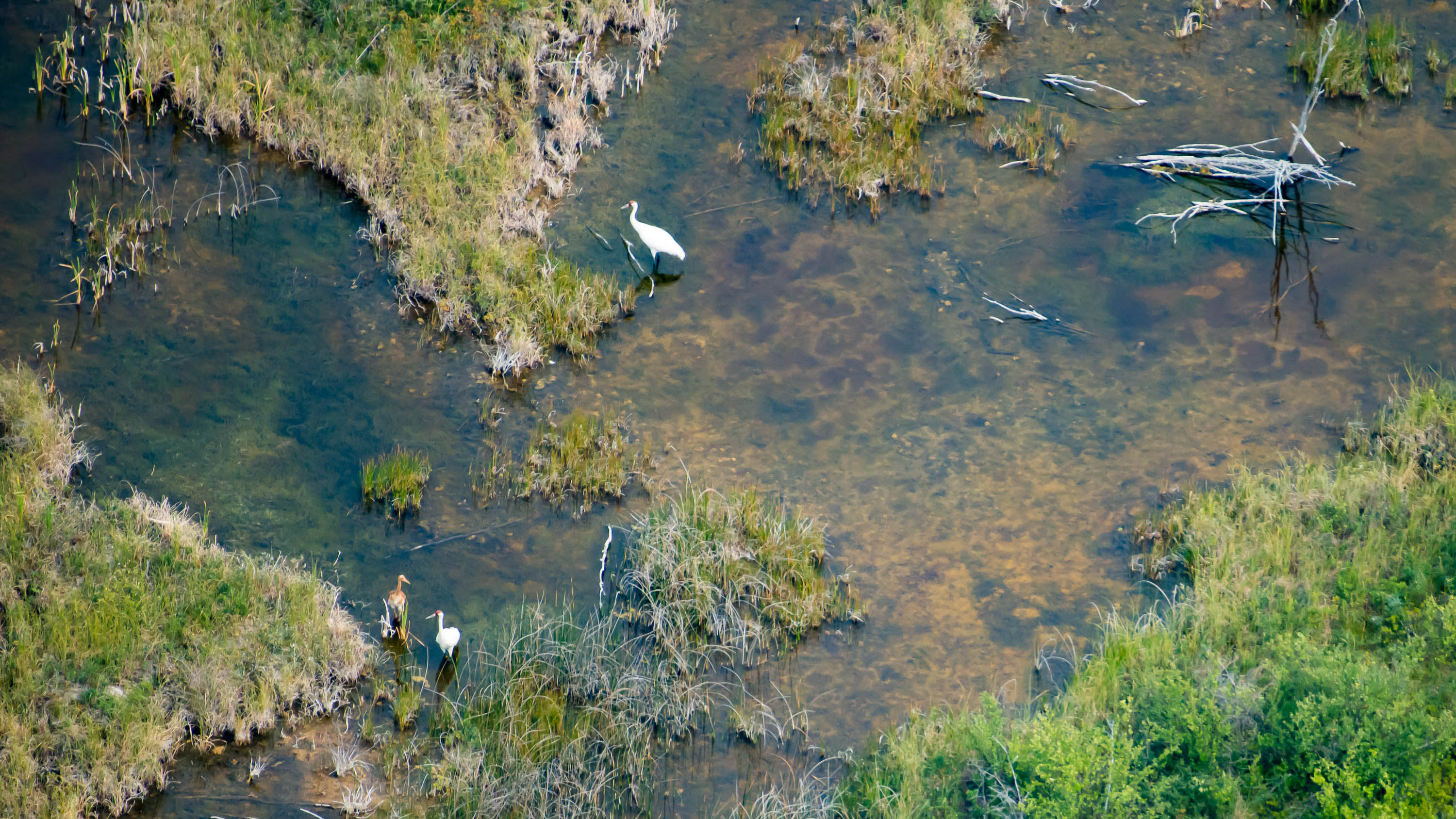 August 2018 aerial survey of whooping cranes in Wood Buffalo National Park. Submitted by Parks Canada.