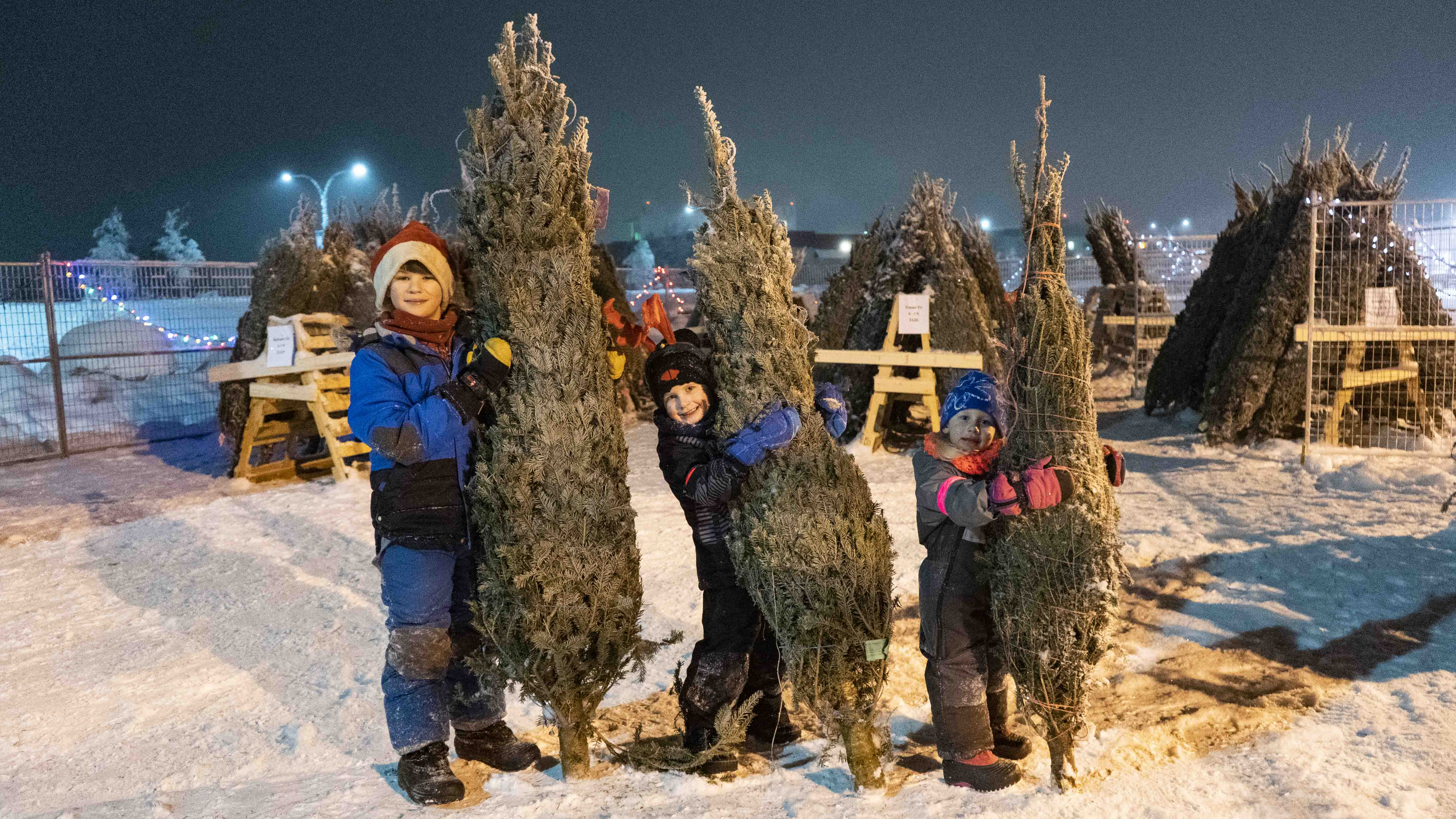Benjamin McQuinn, 10, Liam Fage, 5, and Katie Fage, 4, sell Christmas trees in the Co-op parking lot. Sarah Pruys/Cabin Radio