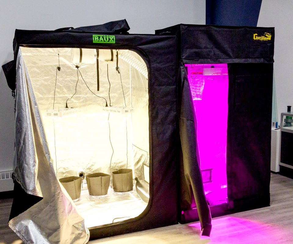 Grow tents inside the Releaf NT store