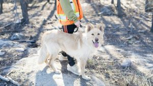 Jackson also fostered Leslie. While she didn't stay long as she didn't get along with his dog, she is great with kids, car rides, and people – and she's still available for adoption through the NWT SPCA. Caitlin Cleveland Photography/Photo