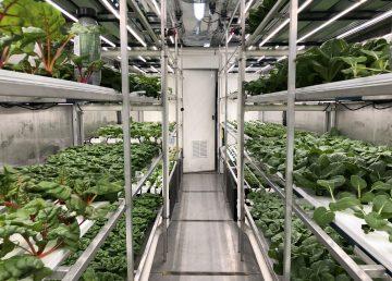 Inside Yellowknife Co-op's hydroponic greenhouse