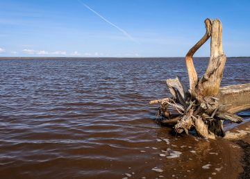 Driftwood on the shore of Great Slave Lake near Hay River in August 2019