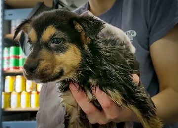 A puppy at the NWT SPCA is seen in a still from the third season of Cabin Radio's Pet Project in October 2019