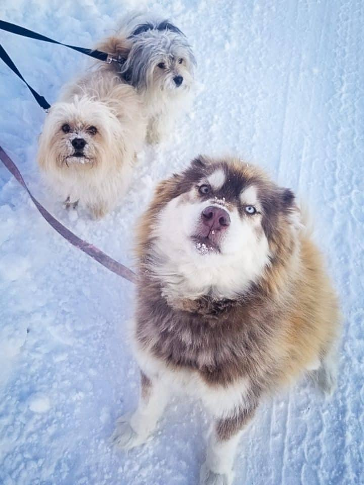 Suukka the dog