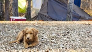 Penny goes camping at Sambaa Deh Territorial Park in 2019. Sarah Pruys/Cabin Radio