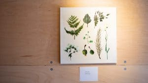 Botanical paintings by Becki Petersen, a Hay River artist, are featured in the YK ARCC's mobile gallery in May 2020.