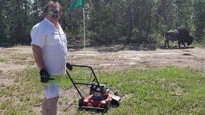 Danny Beaulieu mows the Fort Providence golf course with the help of a bison