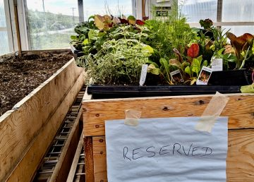 Plants in Inuvik greenhouse