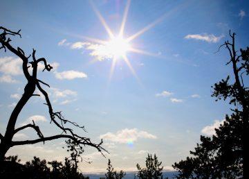 Trees near Bighill Lake outside Yellowknife on September 6, 2020