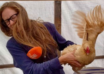 Sarah Pruys has a disagreement with a chicken. Andrew Goodwin/Cabin Radio