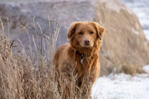 Penny, the Cabin Radio dog