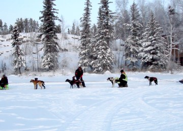 Dogs at the start line of a 20-mile race on Yellowknife's Grace Lake in January 2021