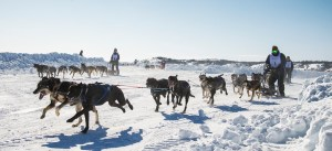A file photo of the 10-Dog Race for the 67th Canadian Championship Dog Derby.