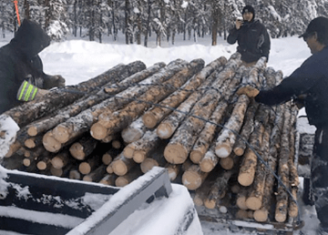 A photo of wood harvesting shared in a spring 2021 Thaidene Nëné newsletter