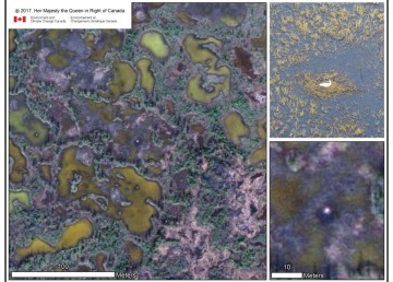 A whooping crane nest as seen in satellite imagery versus aerial survey. Photo: Environment and Climate Change Canada