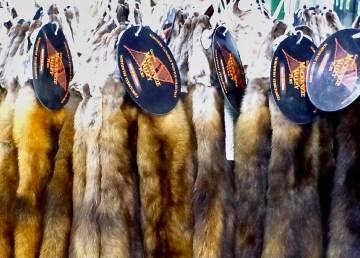 Fox fur pelts with Mackenzie Valley Fur Program labels