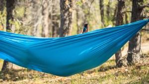 A person in a hammock at Folk on the Rocks 2021. Sarah Pruys/ Cabin Raj