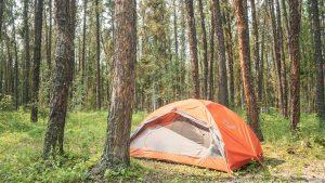 A campsite in Queen Elizabeth Territorial Park in Fort Smith in August 2021. Sarah Pruys/Cabin Radio