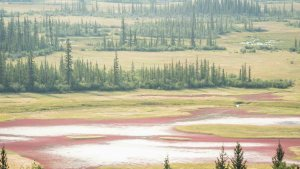 The Salt Plains in Wood Buffalo National Park in August 2021. Sarah Pruys/Cabin Radio